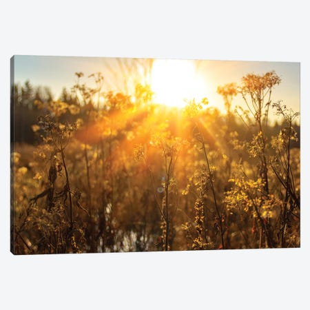 Autumn River Marsh Grass In Rays Of Autumn Sun - Beautiful Gentle Natural Background Canvas Print #VRY252} by Valery Rybakow Art Print