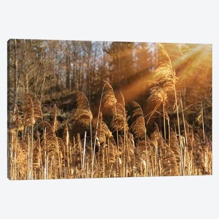 Autumn River Marsh Grass In Rays Of Autumn Sun Canvas Print #VRY255} by Valery Rybakow Canvas Art