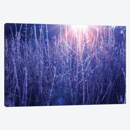 Autumn River Marsh Grass In Rays Of Autumn Sun Canvas Print #VRY256} by Valery Rybakow Canvas Art