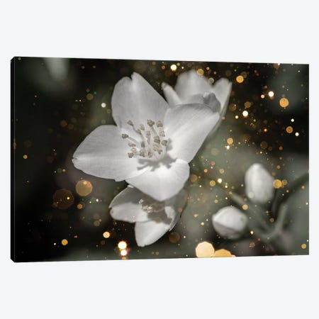 Jasmine Flower Macro With Soft Focus On Gentle Light Dark Golg Bokeh Canvas Print #VRY268} by Valery Rybakow Canvas Art