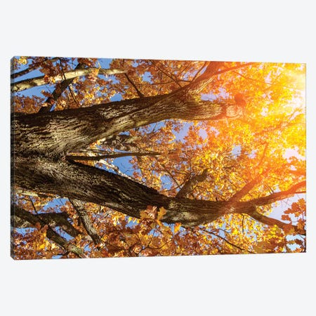 Beautiful Autumn Branches Of An Old Oak Tree With Yellow Yellow Foliage In The Sunshine Canvas Print #VRY274} by Valery Rybakow Canvas Artwork