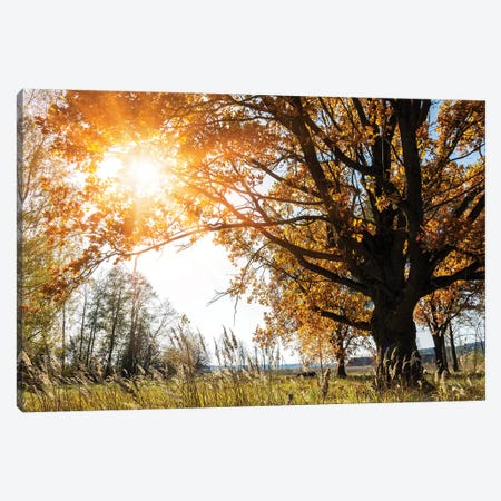 Beautiful Big Old Autumn Oak Tree In Sunlight Canvas Print #VRY275} by Valery Rybakow Canvas Artwork