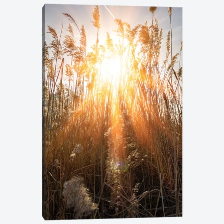 Beautiful Warm Rays Of Sun Through River Grass Canvas Print #VRY308} by Valery Rybakow Canvas Art Print