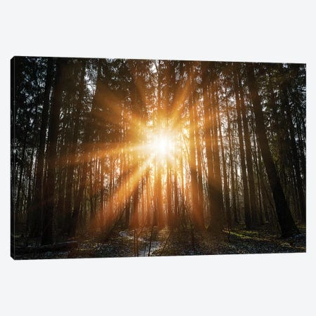 Warm Morning Sun In Winter Forest. Beginning Of Spring In Forest Park Canvas Print #VRY309} by Valery Rybakow Canvas Art Print