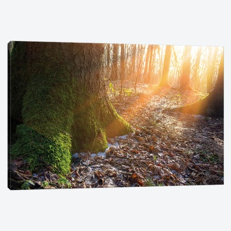 Warm Morning Sun In Winter Forest Canvas Print #VRY310} by Valery Rybakow Canvas Wall Art