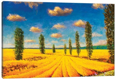 Farm Field Against Background Of Tall Cypress Trees Canvas Art Print