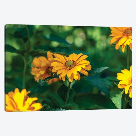 yellow calendula flower, plants with the Latin name Calendula Canvas Print #VRY404} by Valery Rybakow Canvas Print
