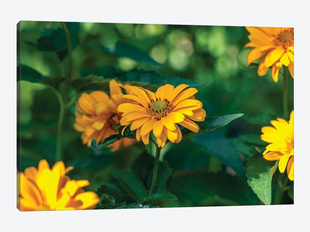 yellow calendula flower, plants with the Latin name Calendula by Valery Rybakow 1-piece Art Print