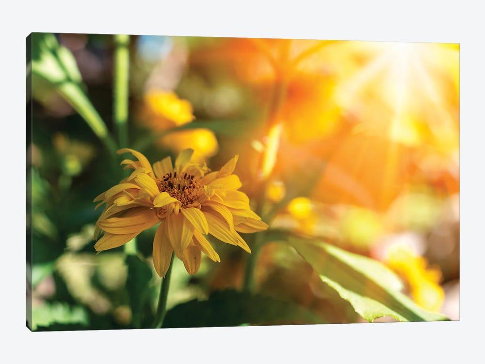 Beautiful yellow marigold flowers - medicinal herb, sunny flowers by Valery Rybakow 1-piece Canvas Artwork