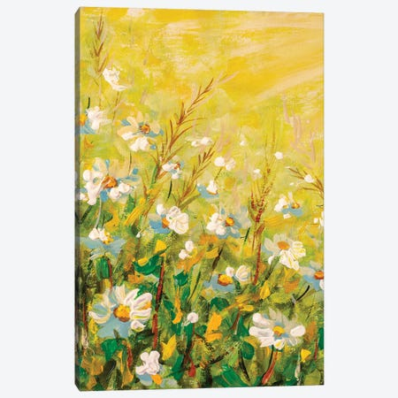 Beautiful nature scene with blooming flowers chamomiles in sun flares Original oil painting Canvas Print #VRY408} by Valery Rybakow Canvas Wall Art
