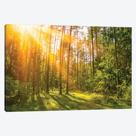 Sunny Forest. Sun Rays In The Spring Forest Canvas Print #VRY451} by Valery Rybakow Canvas Print