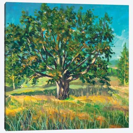 Painting Big Old Oak Tree Canvas Print #VRY454} by Valery Rybakow Canvas Artwork