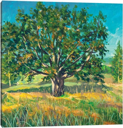 Painting Big Old Oak Tree Canvas Art Print