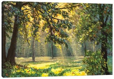 sunlight through trees Canvas Art Print