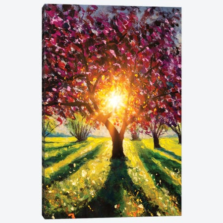 Flowering Blooming Purple Sakura Tree, Rays Of Sun Canvas Print #VRY592} by Valery Rybakow Canvas Art