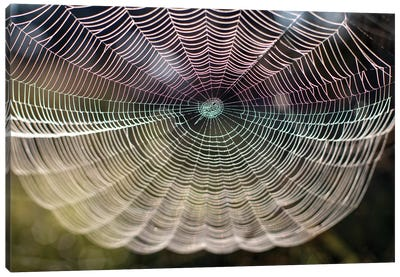 Beautiful Spider Web Close-Up On The Background Of Nature Canvas Art Print