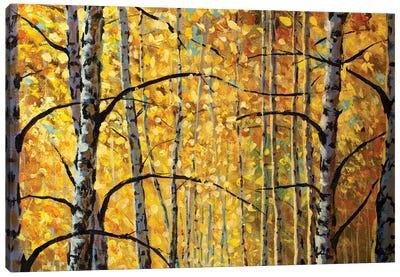 Birch Trees, Branches, Autumn Foliage Canvas Art Print