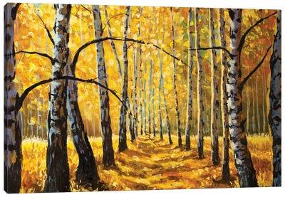 Autumn Birch Trees In Forest Park Alley Canvas Art Print