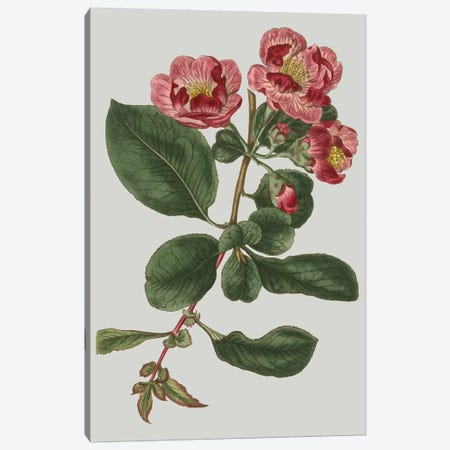 Floral Gems I Canvas Print #VSN113} by Vision Studio Canvas Wall Art