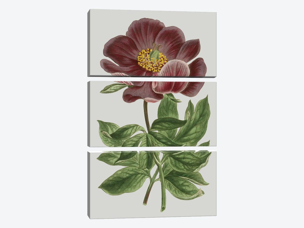 Floral Gems II by Vision Studio 3-piece Canvas Art Print
