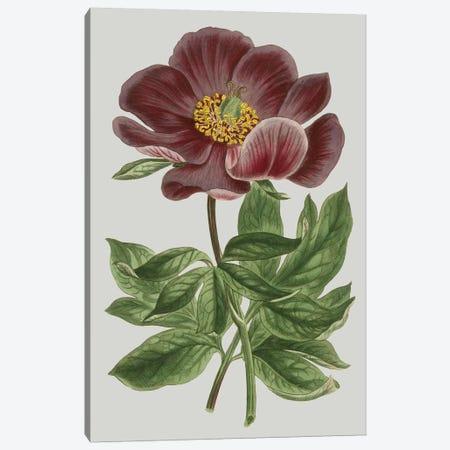 Floral Gems II Canvas Print #VSN114} by Vision Studio Canvas Print