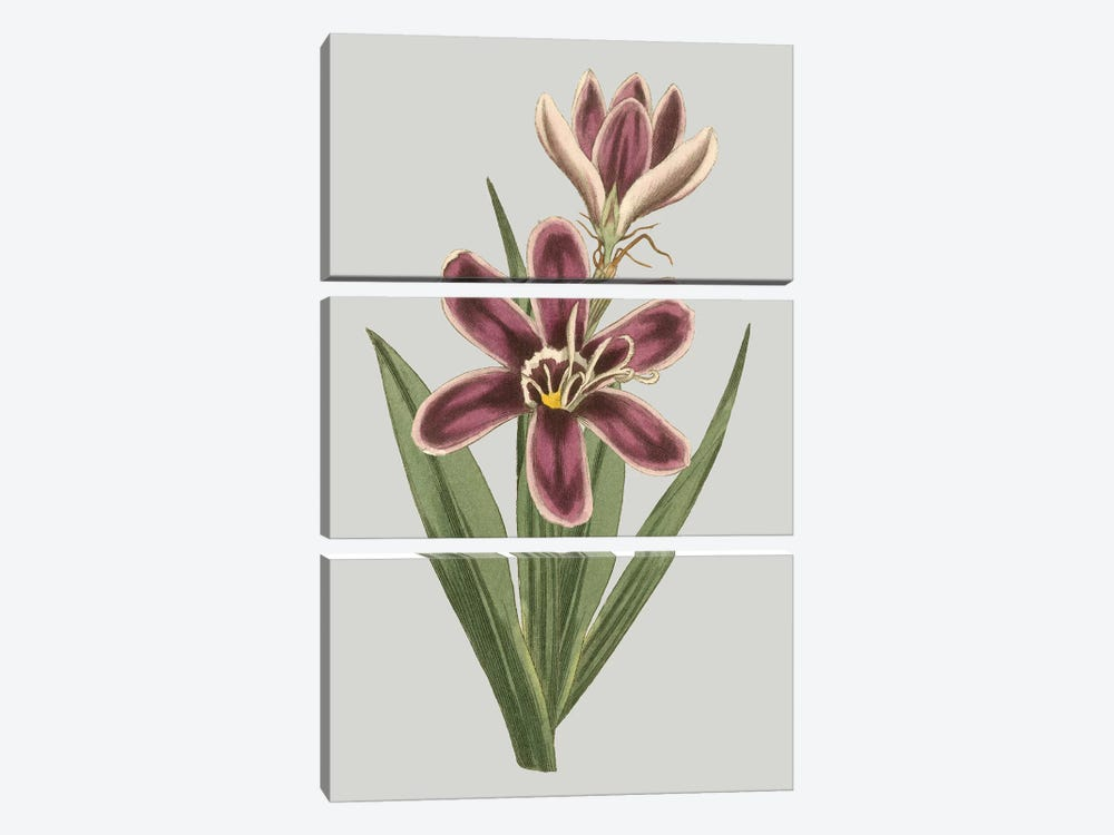 Floral Gems III by Vision Studio 3-piece Canvas Artwork