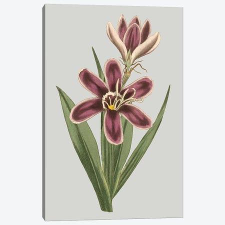 Floral Gems III Canvas Print #VSN115} by Vision Studio Canvas Print