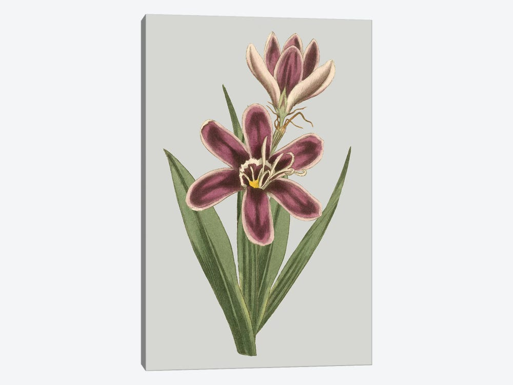 Floral Gems III by Vision Studio 1-piece Canvas Art