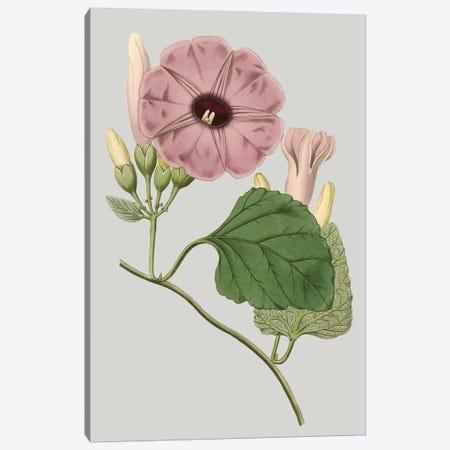 Floral Gems IV Canvas Print #VSN116} by Vision Studio Canvas Art Print