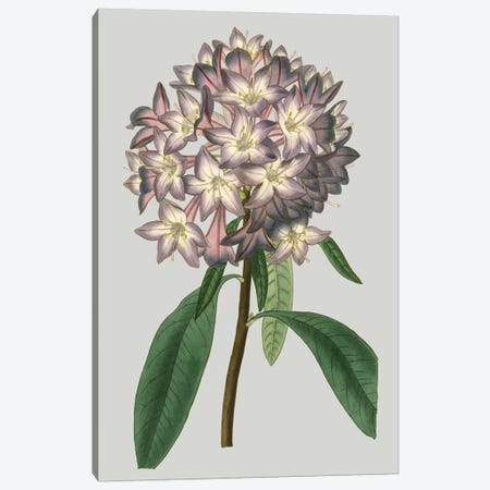 Floral Gems V Canvas Print #VSN117} by Vision Studio Canvas Print
