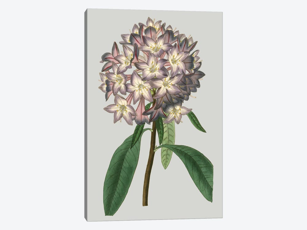Floral Gems V by Vision Studio 1-piece Canvas Art
