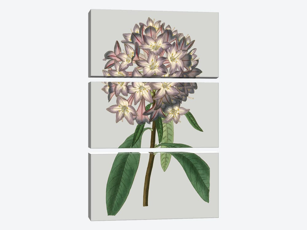 Floral Gems V by Vision Studio 3-piece Canvas Artwork