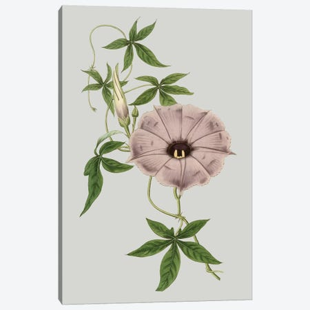 Floral Gems VI Canvas Print #VSN118} by Vision Studio Canvas Art