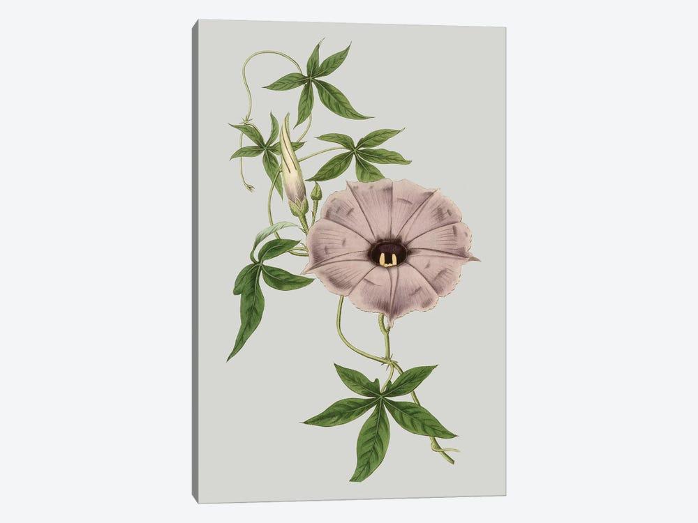 Floral Gems VI by Vision Studio 1-piece Art Print