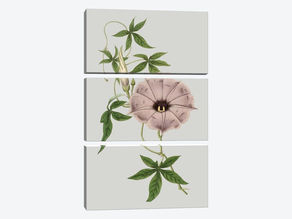 Floral Gems VI by Vision Studio 3-piece Canvas Art Print