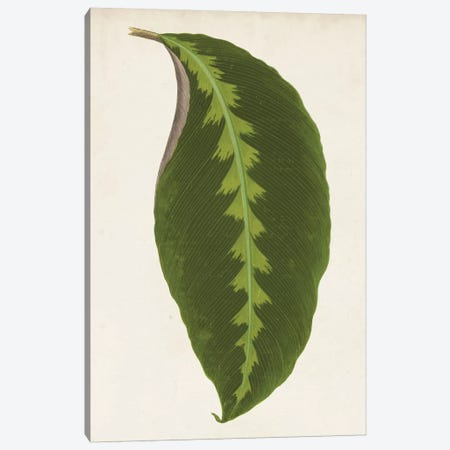 Graphic Leaf I Canvas Print #VSN121} by Vision Studio Canvas Art Print