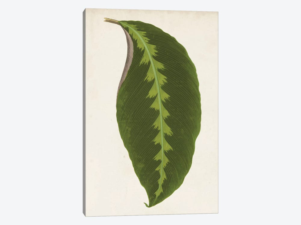 Graphic Leaf I 1-piece Canvas Print