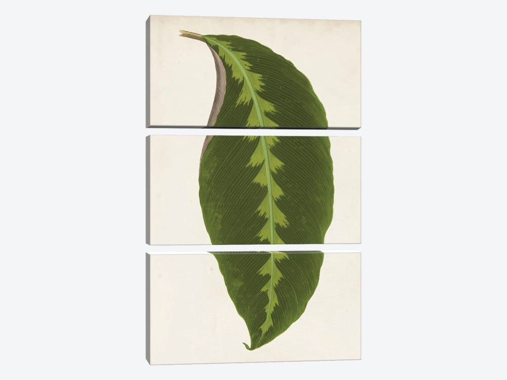 Graphic Leaf I 3-piece Canvas Art Print