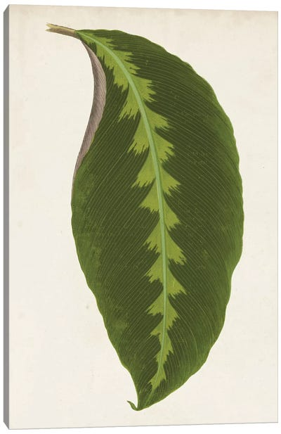 Graphic Leaf I Canvas Art Print