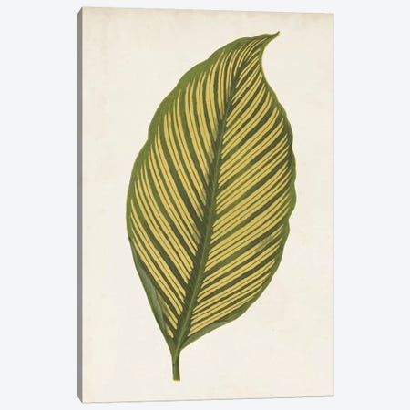 Graphic Leaf II Canvas Print #VSN122} by Vision Studio Art Print
