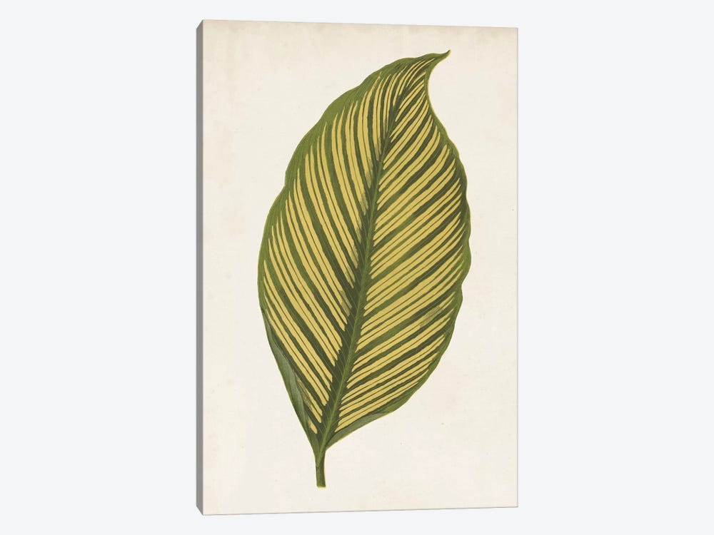 Graphic Leaf II by Vision Studio 1-piece Canvas Art