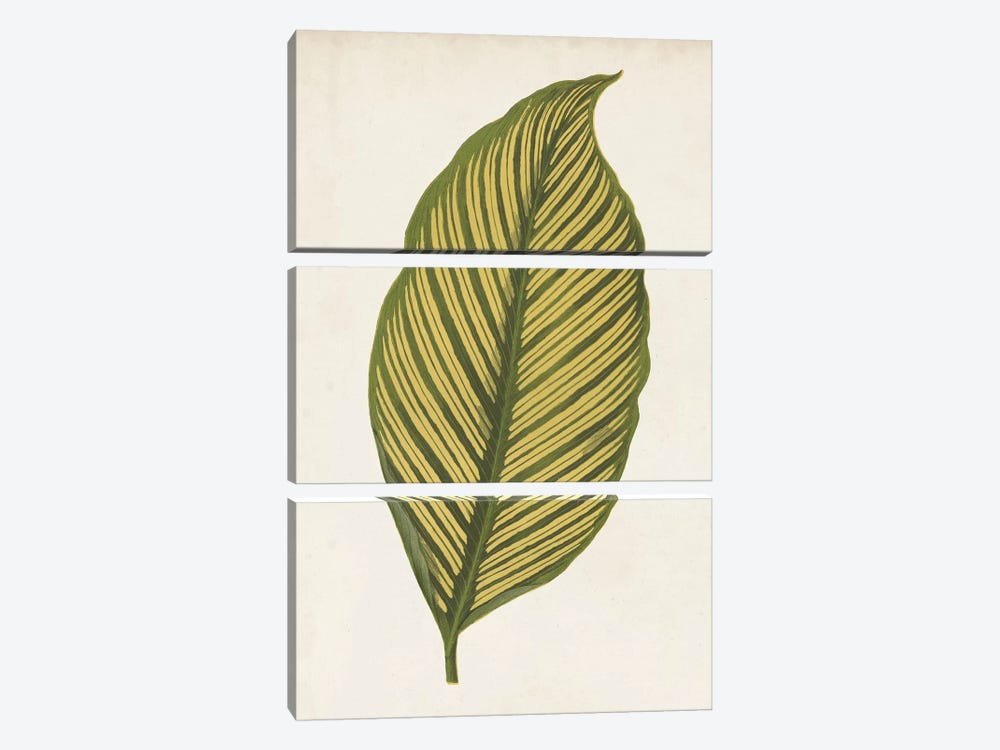 Graphic Leaf II by Vision Studio 3-piece Canvas Artwork