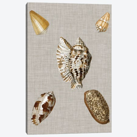 Shells On Linen I Canvas Print #VSN123} by Vision Studio Canvas Art Print