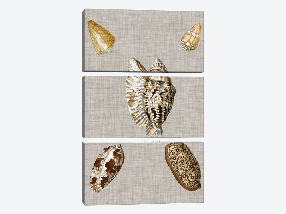 Shells On Linen I by Vision Studio 3-piece Canvas Print