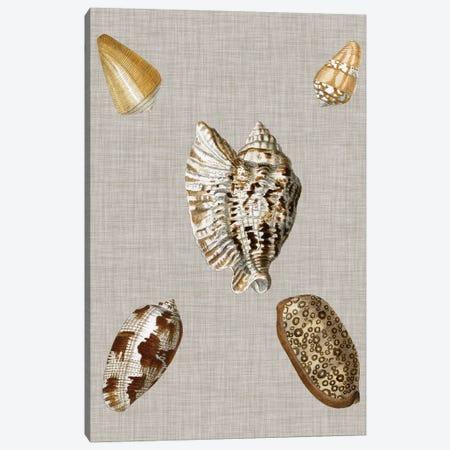 Shells On Linen I Canvas Print #VSN123} by Vision Studio Canvas Art Print