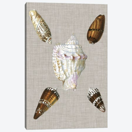 Shells On Linen II Canvas Print #VSN124} by Vision Studio Canvas Art