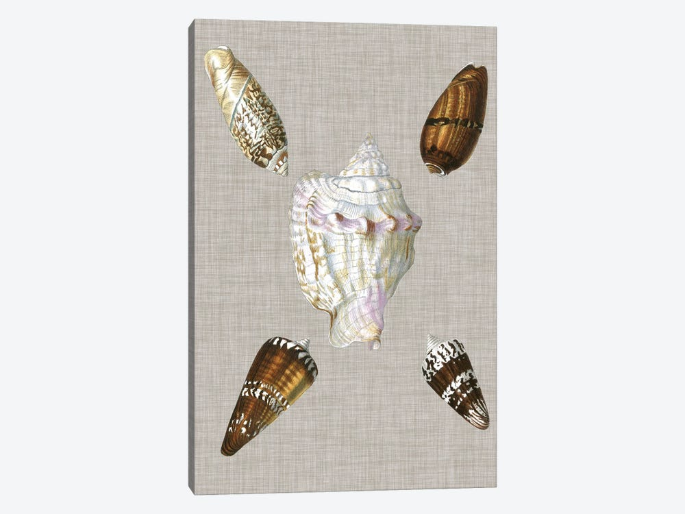 Shells On Linen II by Vision Studio 1-piece Canvas Artwork