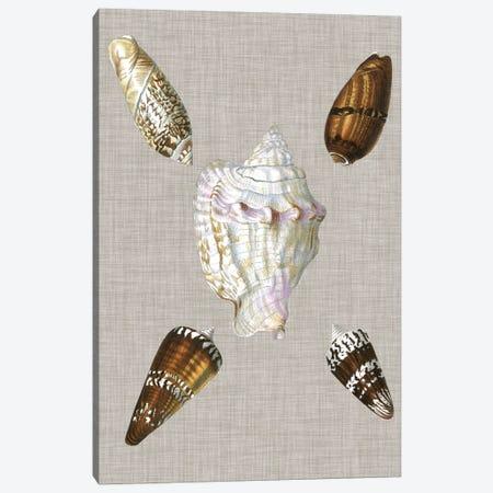 Shells On Linen II Canvas Print #VSN124} by Vision Studio Canvas Art