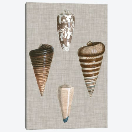 Shells On Linen III Canvas Print #VSN125} by Vision Studio Canvas Wall Art