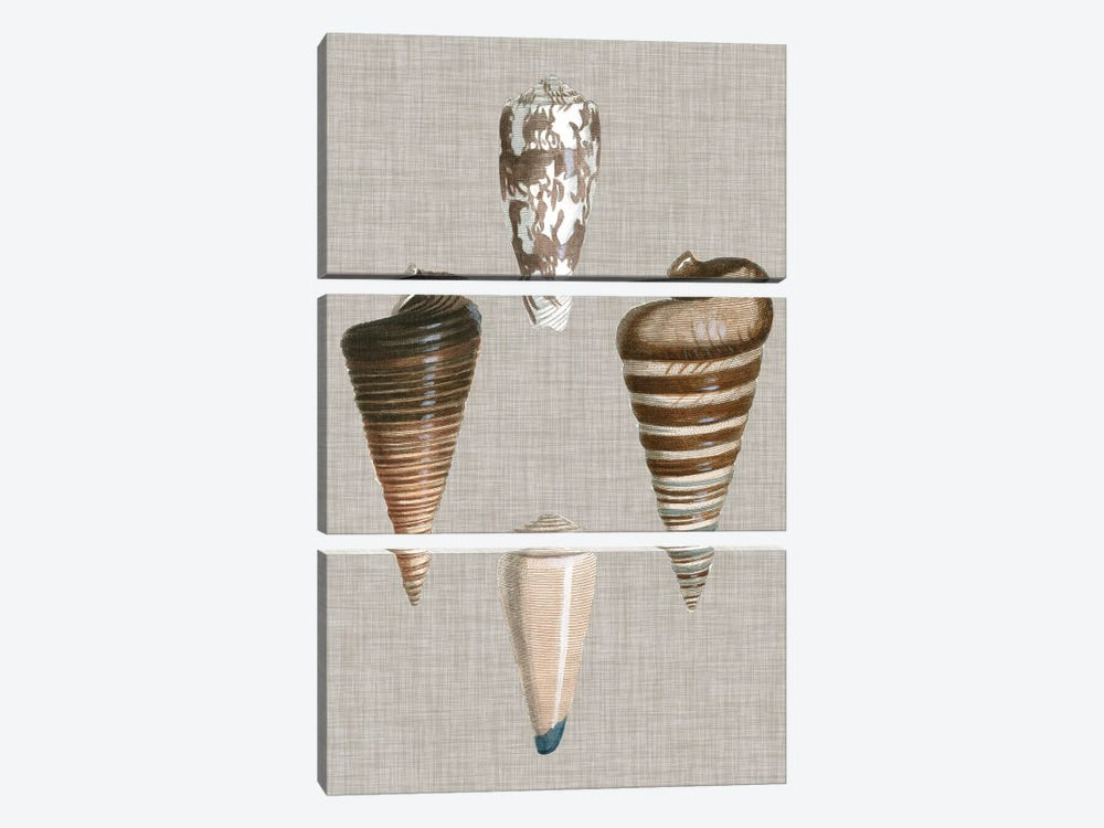 Shells On Linen III by Vision Studio 3-piece Canvas Print